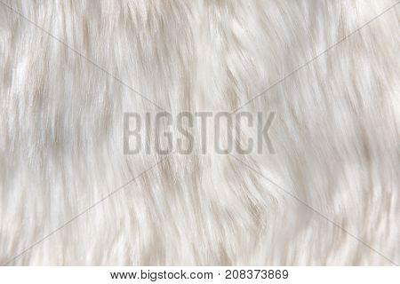 Sheep wool background