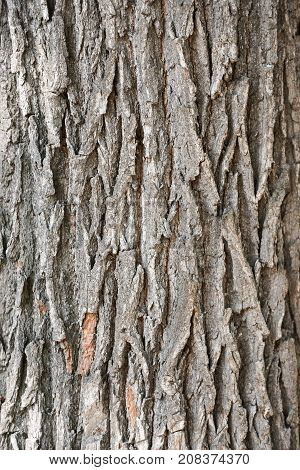 Old oak bark background. Rough brown tileable texture of the tree bark