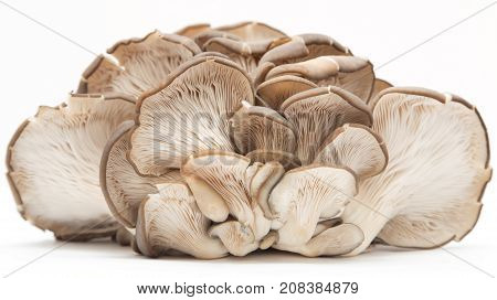 Oyster mushrooms on a white background . Photos in the studio