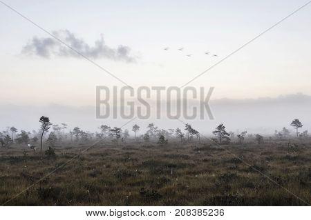 The sun Latvia.Dunikas swamp and mist rises