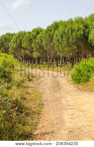 Road In Ajezur With Pine Forest And Vegetation