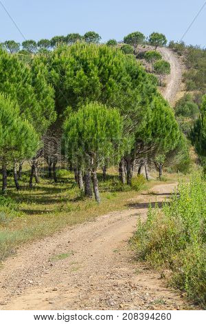 Road In Ajezur With Pine Forest, Mountain And Vegetation