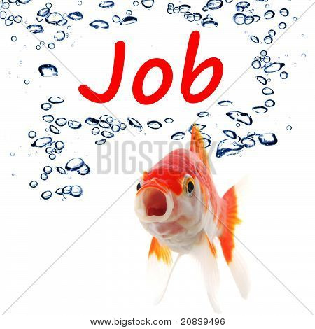 find a job concept with goldfish on white background poster