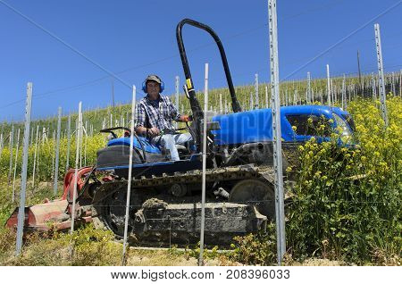 Crawler Tractor Driver Works Among The Rows Of Vineyards