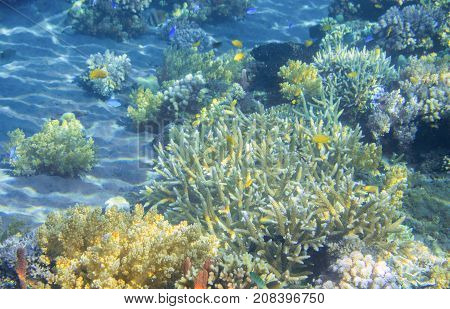 Tropical seashore underwater landscape photo. Coral reef view. Coral reef seascape. Snorkeling or diving. Undersea view banner template. Seaside summer vacation activity. Marine aquarium background