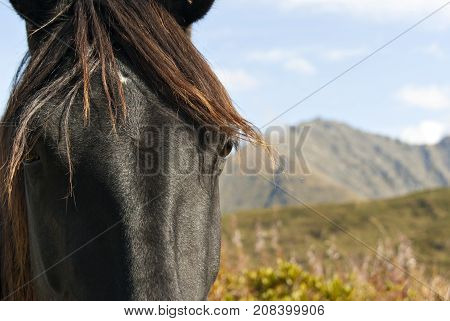 Fragment of the muzzle of a fading black horse close-up. In the background is a blurred mountain landscape.