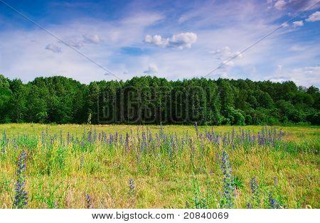 blaue Blumen auf einem Hintergrund des Waldes