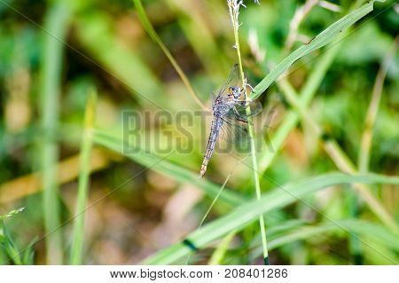 Transparent dragonfly on a stem with a green background
