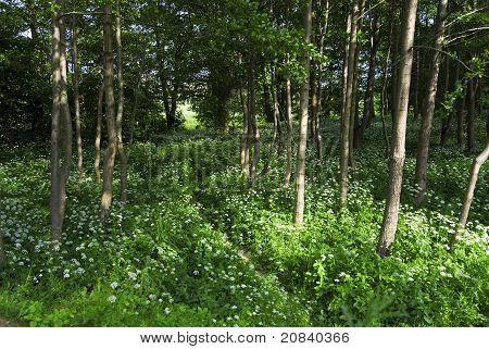 Frühling-Gesamtstruktur mit mehreren weiß Wildblumen