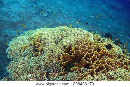Underwater landscape with tropical fish school. Coral undersea photo. Seashore texture. Coral closeup. Sea bottom with coral ecosystem. Tropical seashore snorkeling. Marine relief. Tropic lagoon