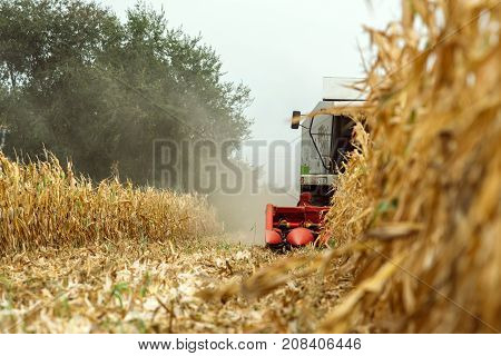 Corn maize harvest combine harvester working on ripe maize crop field selective focus