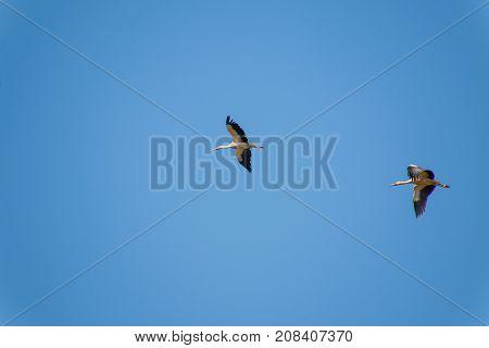 Group Of Storks