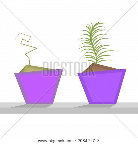 Flower in a pot. Care of houseplants. The dried plant. A healthy plant. Vector illustration.