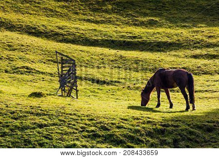 Horse Grazing On The Gassy Hillside