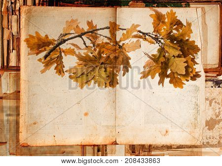 old book - with autumnal branch on old paper texture in detail