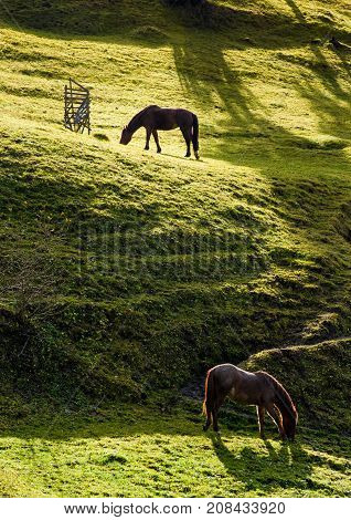 Two Horses Grazing On The Gassy Hillside