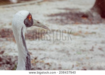 portrait of a crane with a long neck a beautiful bird looking into the distance