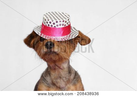 small dog wearing a white and pink hat that falls on his eyes
