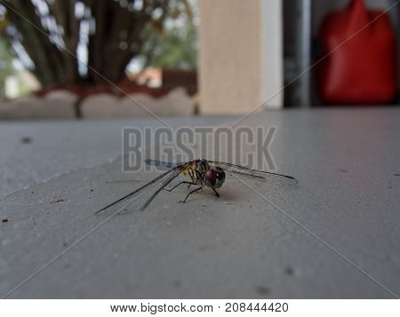 A Dragonfly Landed on the Garage Floor in Winter Haven Florida