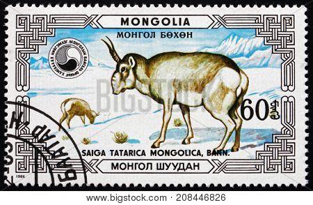 MONGOLIA - CIRCA 1986: a stamp printed in Mongolia shows Saiga Antelope Saiga Tatarica Mongolica Buck and Doe Saiga Antelope is Critically Endangered circa 1986