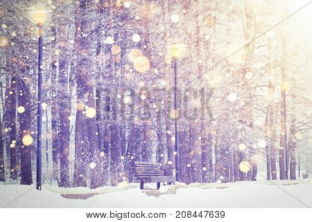 Shining snowflakes on winter park background. Christmas and New Year theme. Winter snowfall in colorful sunset.