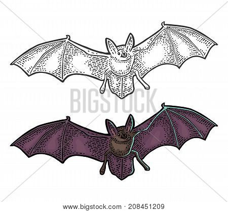 Bat flying with scary face. Vector color vintage engraving illustration. Isolated on white background. For invitation and poster Halloween.