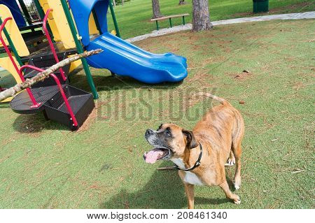 Big Dog Playing In The Playground