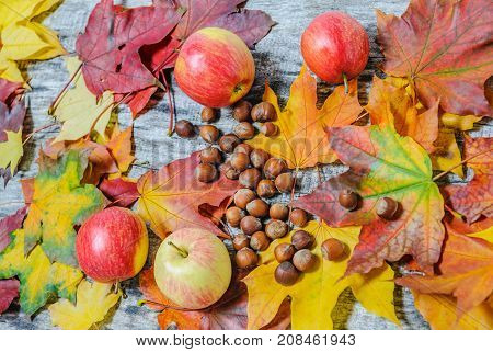 Maple Leaves, Apples, And Hazelnuts Scattered On The Old Wooden