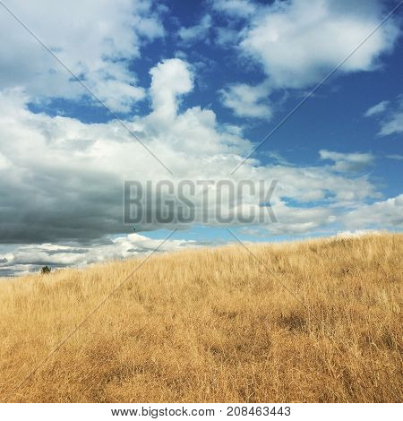 Blue kite flying in distance high over hill in yellow grass field. Big white and dark clouds with blue sky over field. Lone tree top in background.