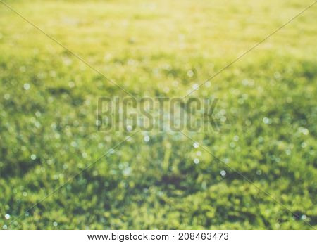 Abstract colorful blur de focused background greensward with sunlight, soft focus / De focused sunlight bokeh twinkling lights background