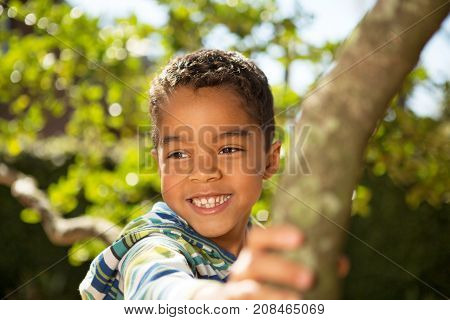 Little boy playing in a tree at the park