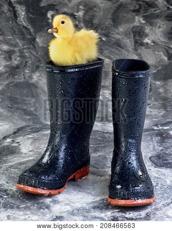 A pair of Black rain boots and baby ducky.