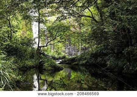 tropical rain forest in far north Queensland, Australia