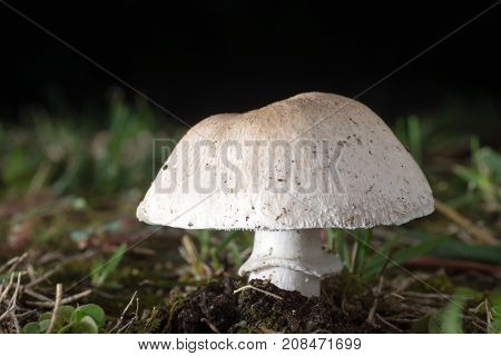 Flash Macro Photograph of Mushroom Fruiting Body