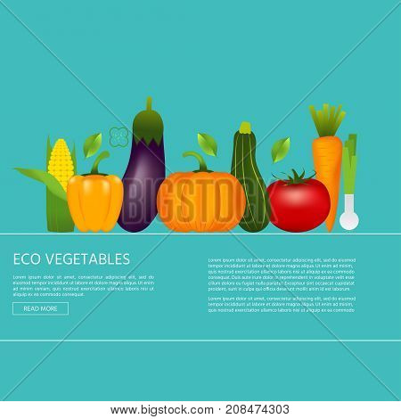 Collection of realistic healthy vegetables such as: carrot tomato pepper eggplant pumpkin marrow zucchini. Quality vector banner about diet eco food