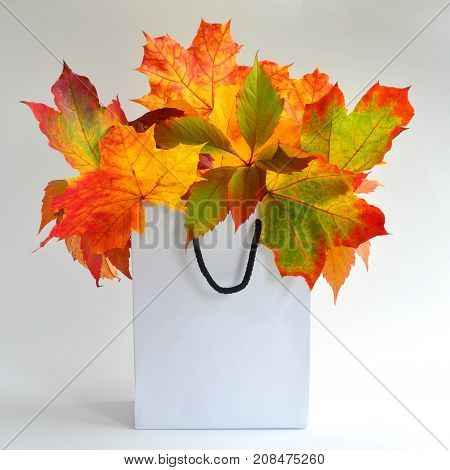 Autumn leaves in bag on white background. Season composition for mock ups template with text place.