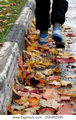 Autumn mood. Legs of man walking along the sidewalk through the colorful maple leaves lying on the road.