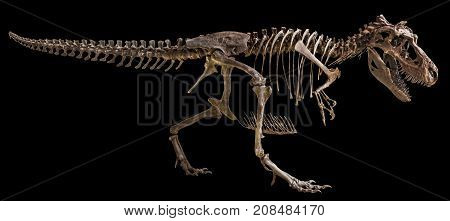 Tyrannosaurus Rex Skeleton On Isolated Background