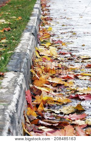 Autumn mood.Bright maple leaves lie on the road at the curb . The leaf fall.