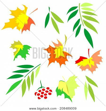 Set of silhouettes of autumn leaves. Maple, grapes, ash and mountain ash. Isolated on white background.