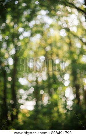 Bokeh forest backdrop. Abstract forest backdrop. Blurry and bokeh. Defocused natural background. Background with blurred nature.