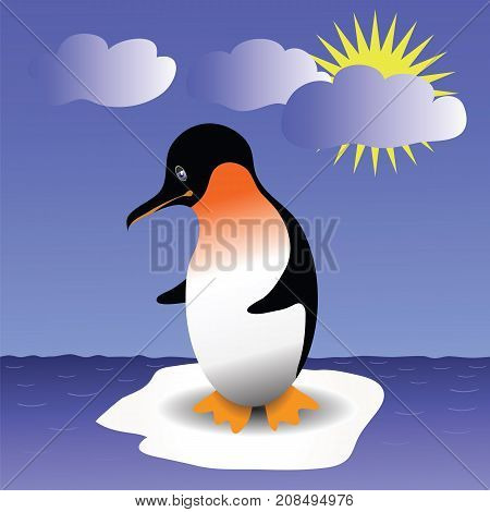 Young Penquin Stands on an Ice Floe in The Open Ocean