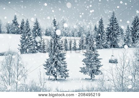 Christmas Winter Card With Fir Trees And Snowflakes