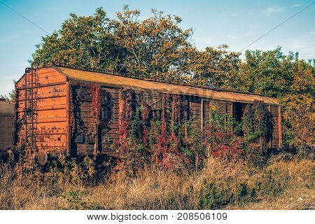 Old wooden railway wagon derelict captured by vegetation.