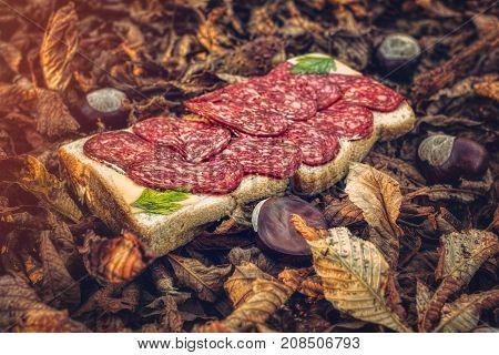 Autumn sandwich with salami, close up view .