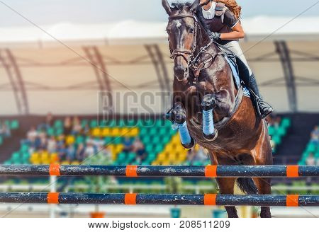 Bay dressage horse and woman in white uniform performing jump at show jumping competition. Equestrian sport background. Bay horse portrait during dressage competition.
