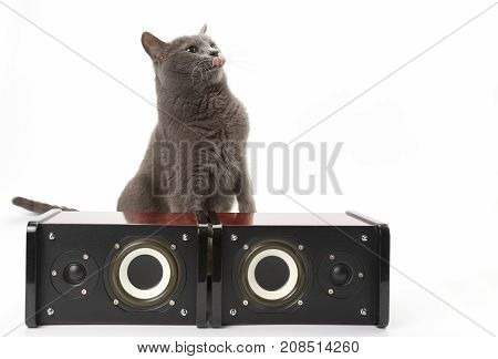 grey cat sitting with two stereo audio speakers on white background