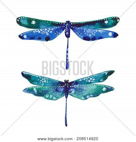 two dragonflies watercolor illustration on white background