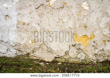 Old beige plaster wall with green grass