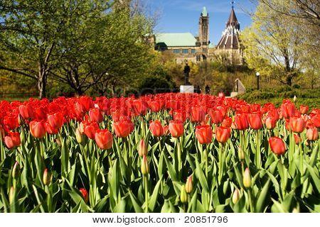 National Tulip Festival